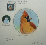 Robin d'Arcy Shillcock