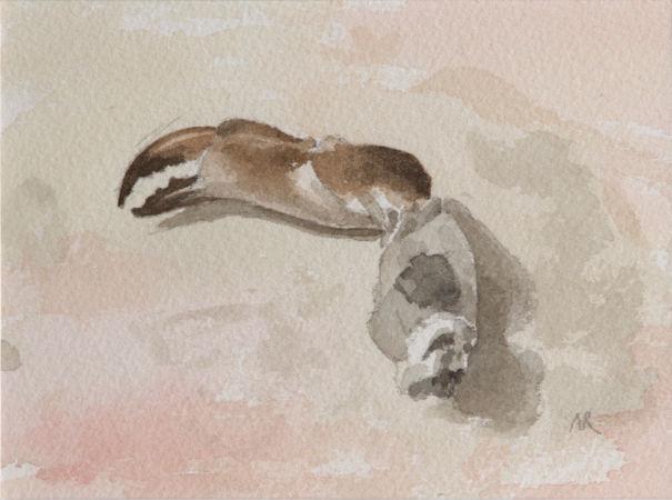 Krabbenpoot