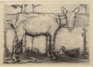KE5, Mankes. Jan, Geit, 1912-13, ets (zware proefdruk) 11,6x17cm